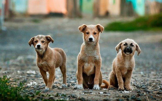 tres cachorros solos en medio de la calle