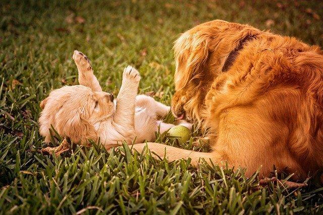 mamá perra jugando con su hijito