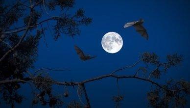 dos murciélagos volando en una noche de luna llena