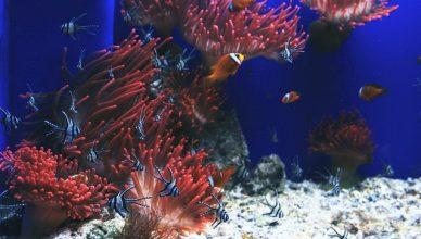 diferentes especies de peces en el mar