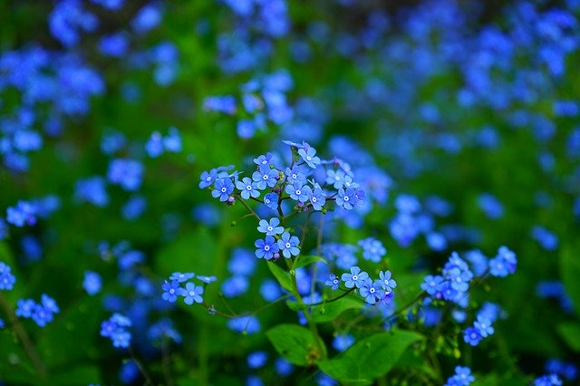 flores azules: debes proteger a tus flores mas frágiles