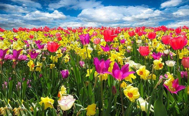 plantas de flor en el exterior que si algun dia tienes debes proteger