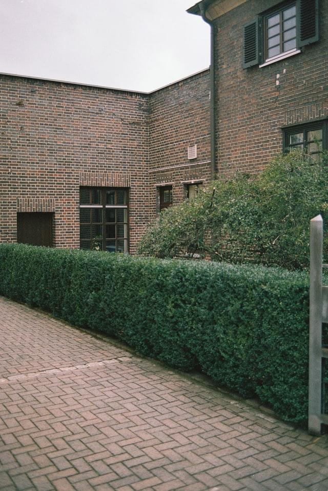 arbustos para decorar muros y vallas de casas