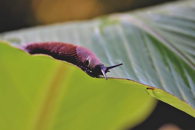 plagas de babosas: muy perjudiciales para tus plantas