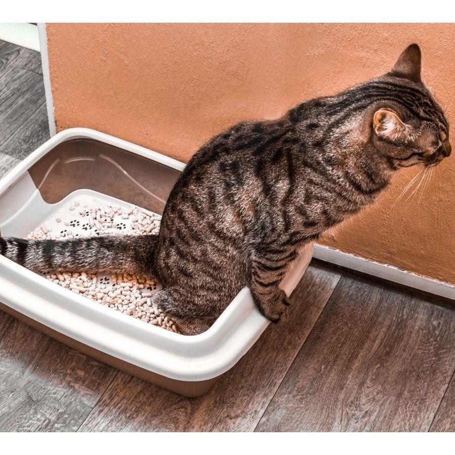 tu gato necesita un aseador para hacer ahí sus necesidades y ser feliz
