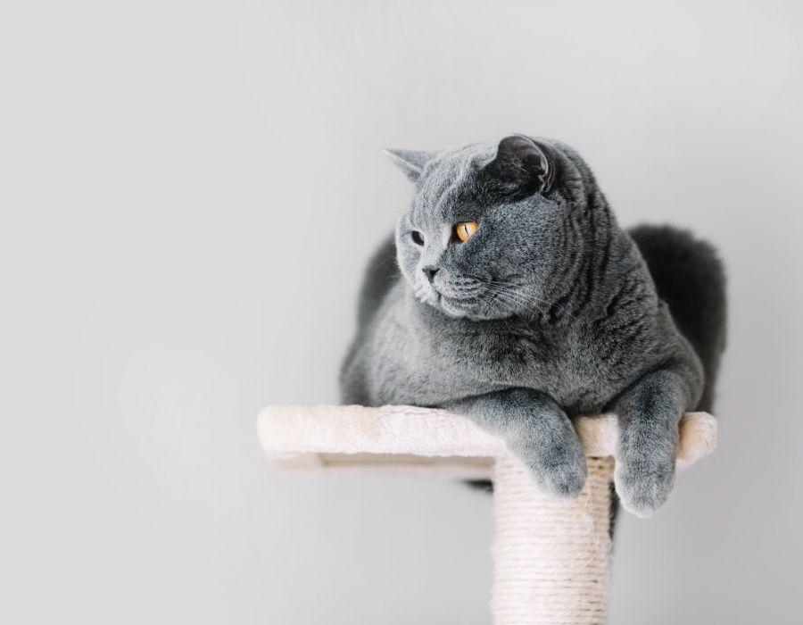 gato encima de su rascador observando su alrededor