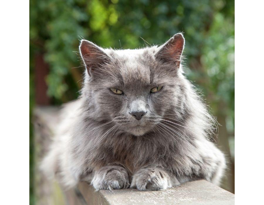 gato viejito que vive con buena calidad de vida