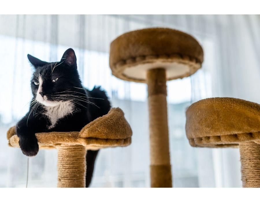 arbol rascador: uno de los mejores accesorios ideales para gatos