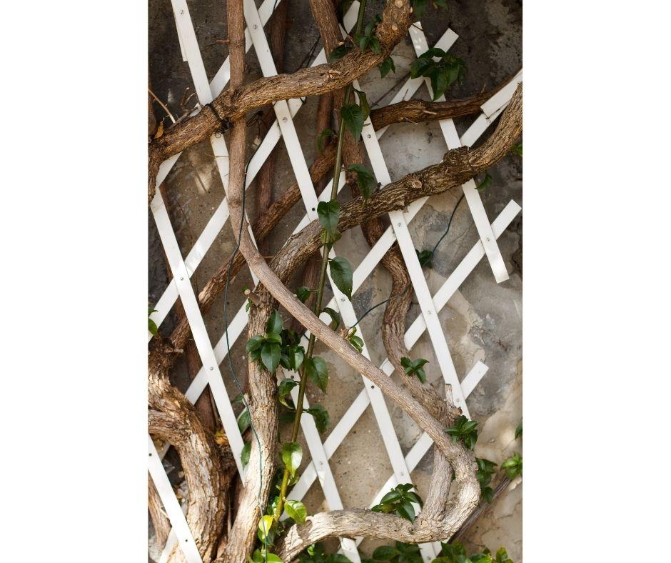 productos para jardín; soporte para plantas expansibles para crear una decoración de ensueño