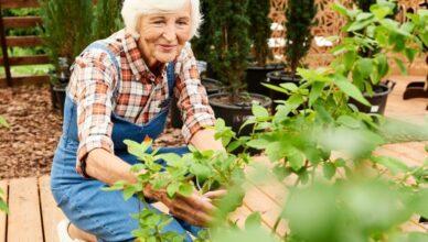 mujer cuidando de su jardin
