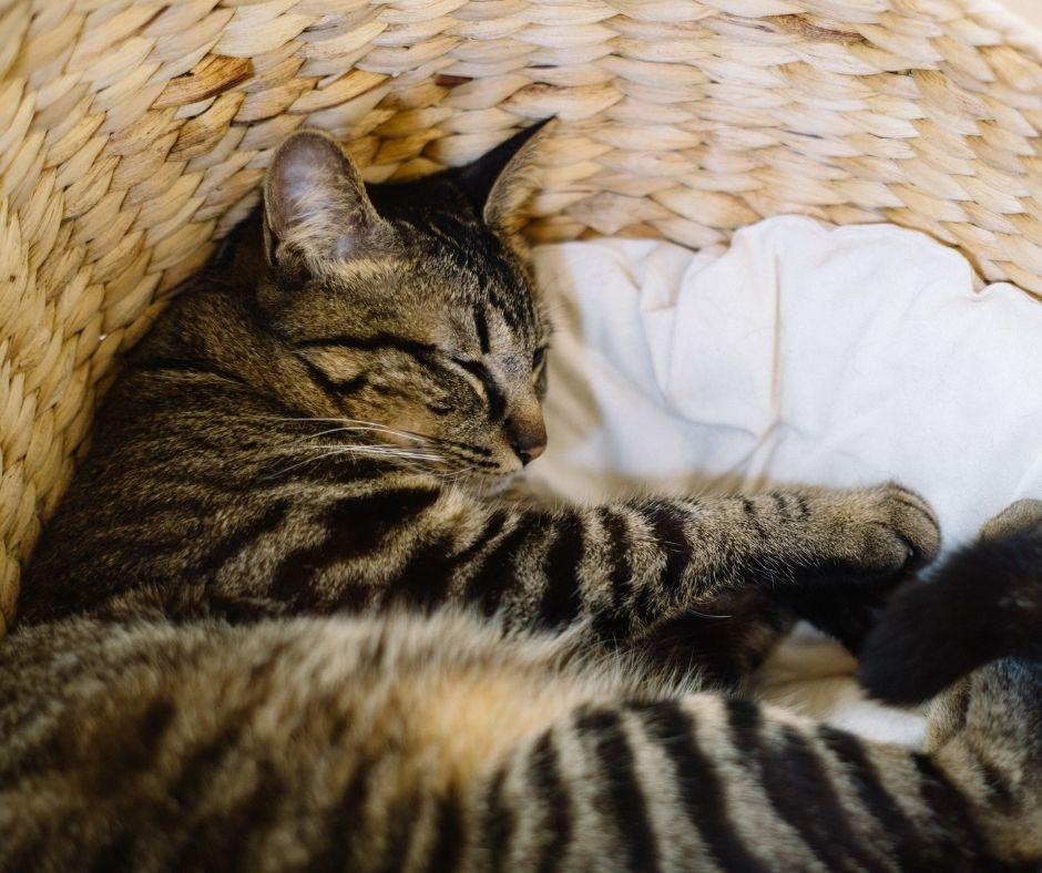 cesta de mimbre: uno de los accesorios ideales para gatos