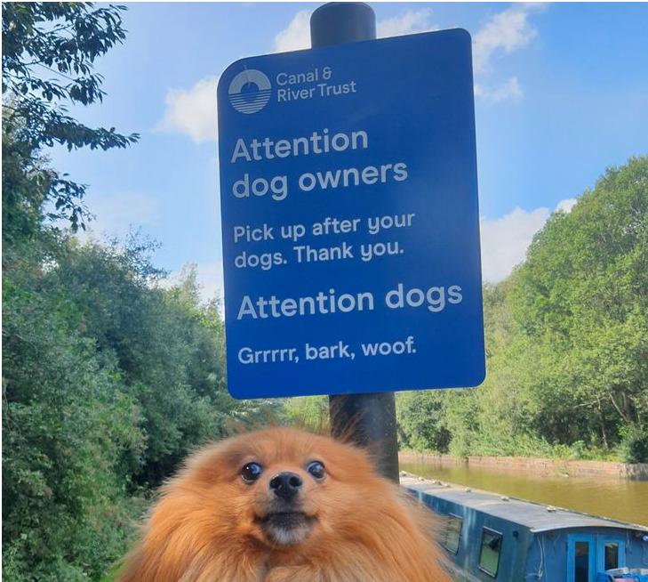 cartel con un perro con cara de sorprendido