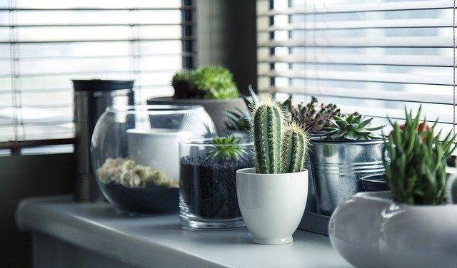 cactus en una casa para darle estilo