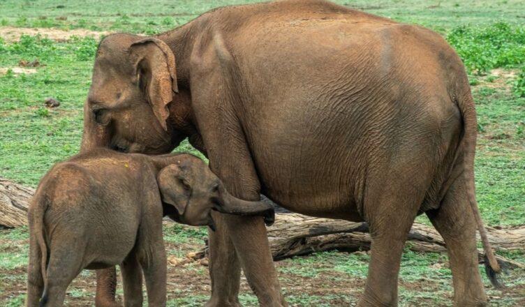 mama elefante con su cría