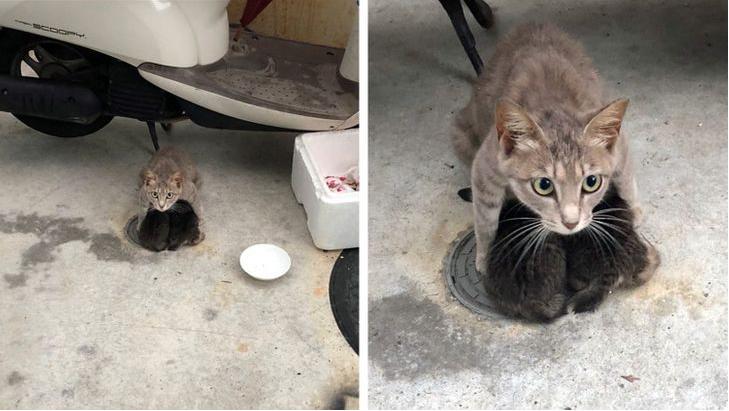 top imágenes conmovedoras: gata protegiendo a sus crías